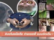 ลิงขโมยมือถือ ถ่ายวีดีโอ ถ่ายภาพเซลฟี่