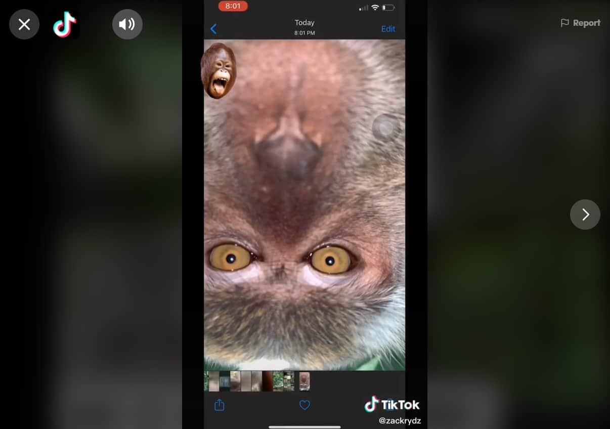 ลิงขโมยมือถือถ่ายเซลฟี่ ถ่ายคลิบวีดีโอแบบจัดเต็ม